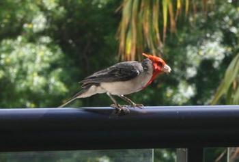 Mariott bird.jpg